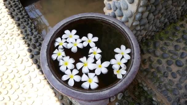 A lot of white flowers of frangipani on the water in large vase. Japanese zen garden for relaxation balance and harmony spirituality or wellness.