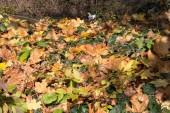 na podzim listy rostlin a plodů v podzimních barvách na krásný slunečný den s modrou oblohou v jižní Německo krajinu oblasti nedaleko města Mnichov a stuttgart