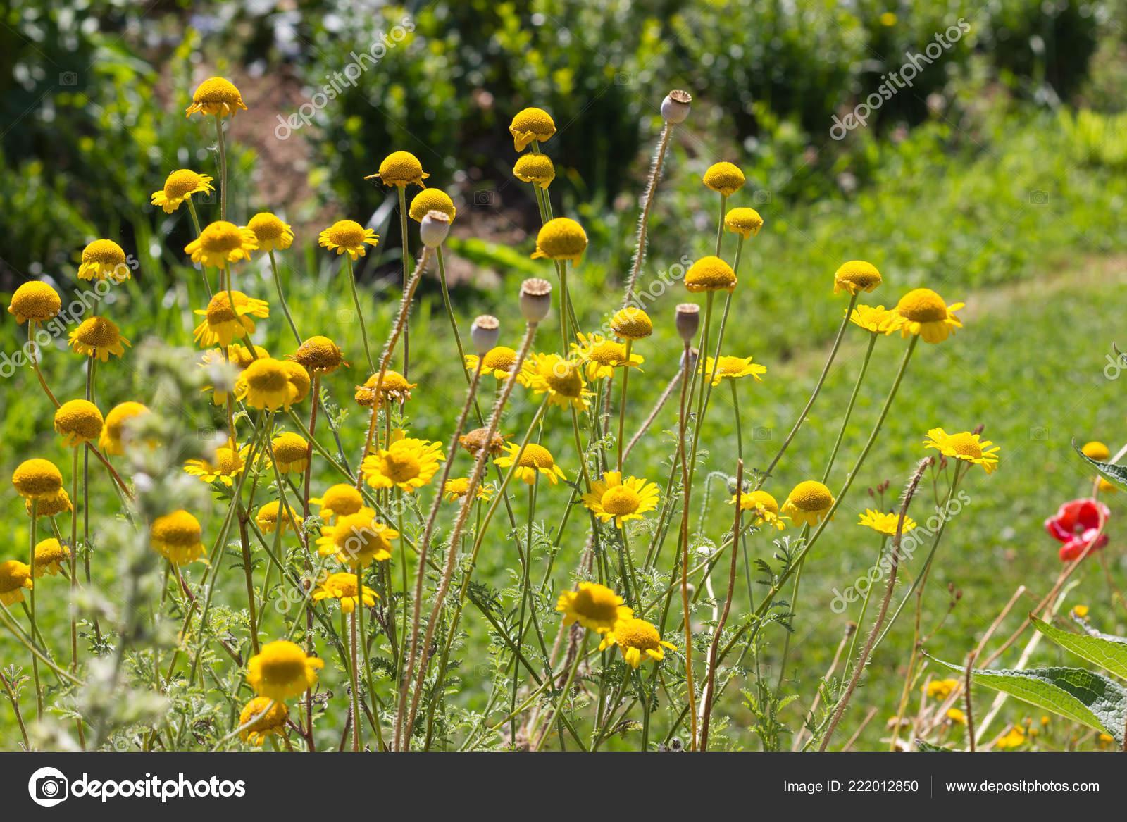Fiori Del Mese Di Giugno una giornata molto soleggiata nel mese giugno germania del