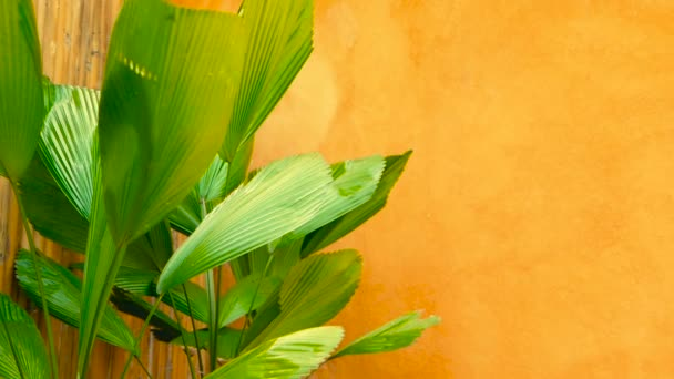Green juicy tropical foliage. Floral spring or summer background.