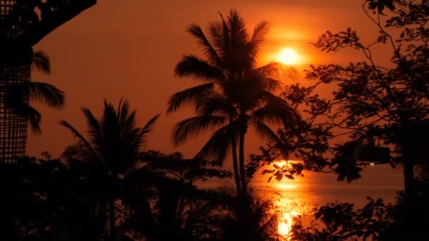 Palm stromy siluety na tropické pláži na ostré slunce. Exotické stromy a velké oranžové slunce.