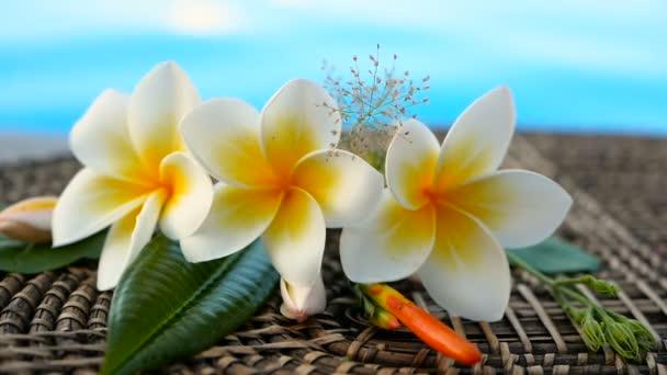 Čerstvé bílé keře plumeria tropických exotických květin přes modré bazénové vody