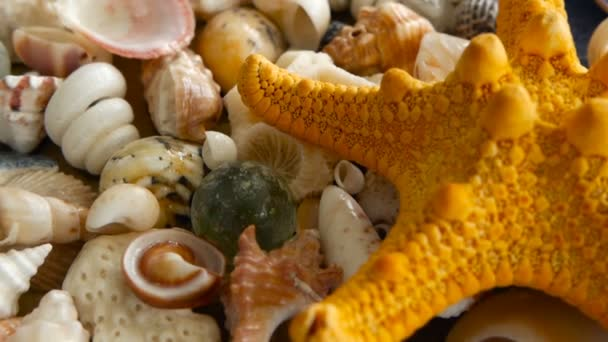 Large Yellow Seastar and close up lots of different mixed colorful seashells as background. Various corals, marine mollusk and scallop shells. Sea vacation travel and beach holiday tourism concept.