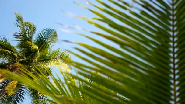 Kokosové stromečky korun proti zobrazení Perspektiva modré Slunečné nebe od země.