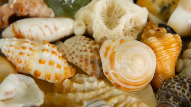 Different mixed colorful seashells as background. Various corals, marine mollusk and scallop shells.