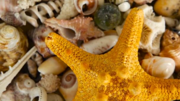 verschiedene bunte Mischmuscheln als Hintergrund. Verschiedene Korallen, Muscheln und Muscheln.