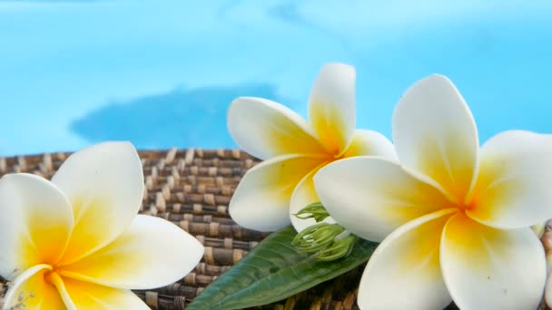 Fresh white frangipani plumeria tropical exotic flowers over blue swimming pool water, background spa still life, travel and tourism, concept of a summer paradise vacation and aroma relaxation.