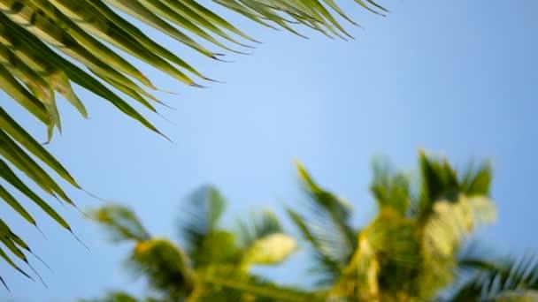 Kókusz pálmafák koronák ellen kék napos ég perspektivikus nézetet a földről.