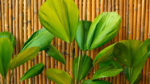 Šťavnaté tropické zeleně. Květinové jarní nebo letní pozadí
