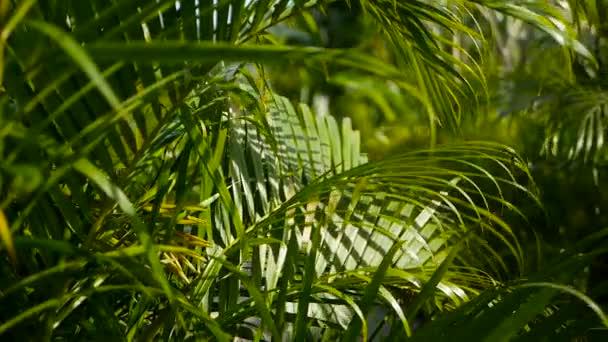 Blur trópusi zöld Pálma levél, nap fény, absztrakt természetes háttérben a bokeh. Defocused buja lombozat