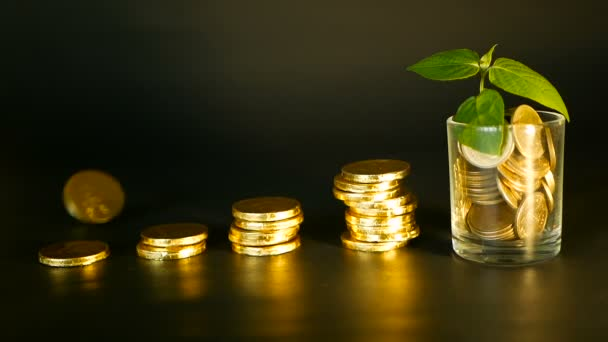 Management efficiency. Stacks of golden coins near full glass and green leaf of sprout on black background. Success.