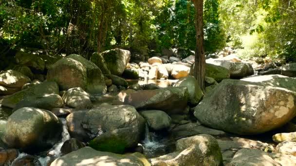 Scenérie deštného pralesa a řeka s kameny. Hluboko tropický prales. Džungle se stromy nad rychle rocky proudu.