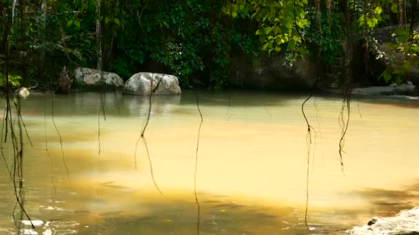 Rainforest and river with rocks. Wild vegetation, deep tropical forest. Jungle with trees over fast rocky pool of water.