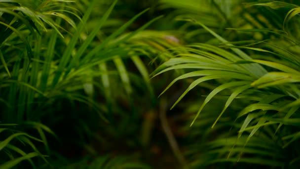 tropisch grünes Palmblatt mit Sonnenlicht verschwimmen, abstrakter natürlicher Hintergrund mit Bokeh. defokussiertes üppiges Laub