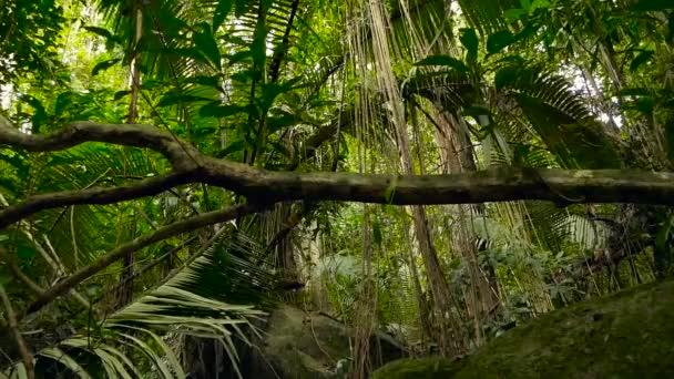 Džungle na šířku. Exot Asie. Mechový liány z deštný prales baldachýn. Zelená přírodní pozadí