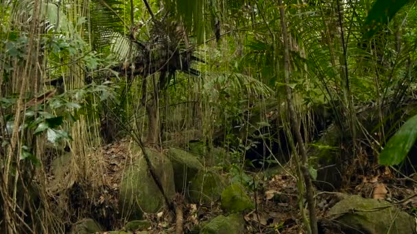 Jungle landscape. Exotic asia woods. Mossy lianas dangling from the rainforest canopy. Green natural background