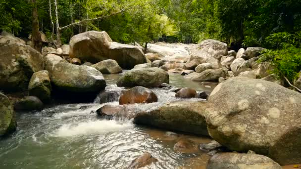 Scenery of rainforest and river with rocks. Deep tropical forest. Jungle with trees over fast rocky stream.