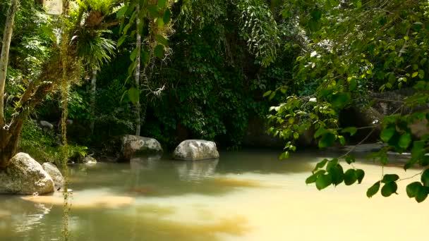 Regenwald und Fluss mit Felsen. wilde Vegetation, tiefer Tropenwald. Dschungel mit Bäumen über schnellem steinigen Wasserbecken.