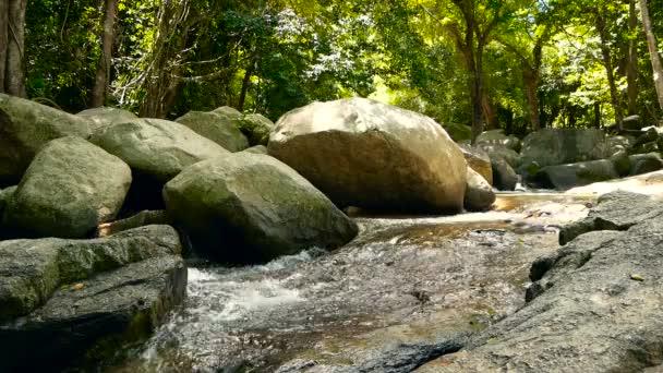 Magická krajina deštného pralesa a řeka s kameny. Divoká vegetace, hluboké tropický prales. Džungle se stromy nad rychle rocky proud s peřejemi. Parní s kamenem kaskády protéká exot.