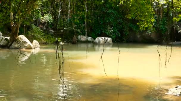 Foresta pluviale e fiume con le rocce. Vegetazione selvatica, foresta tropicale profondo. Giungla con alberi sopra veloce rocciosa pozza dacqua.
