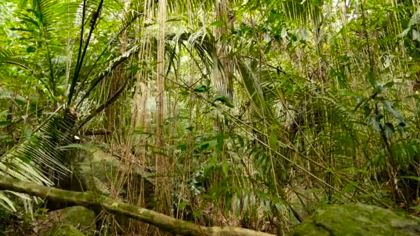 Paesaggio della giungla. Legni esotici di asia. Muscose liane pendenti dalla volta della foresta pluviale. Priorità bassa verde naturale