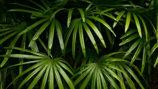 Jasné šťavnaté exotické tropické zelení v lese džungle Rovníkové klima. Pozadí s neobvyklé rostliny listí kýval. Přírodní textura s šťavnaté listy. Slunce na Palmový list