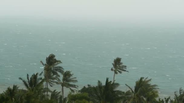 Küstenlandschaft bei Naturkatastrophe Hurrikan. Starken Zyklon Wind schwankt Kokosnuss-Palmen. Schwerer tropischer Sturm