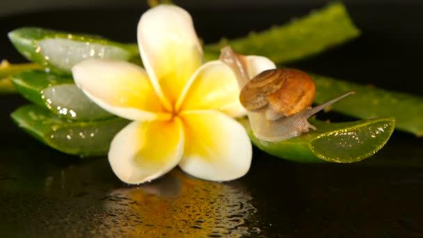 mollusker aloe vera