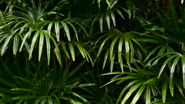 Bright juicy exotic tropical greens in the jungle forest equatorial climate. Background with unusual plant foliage swaying. Natural texture with juicy leaves. Sunlight on the palm leaf