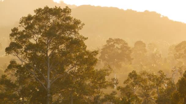 Džungle exotický Les ráno večerní mlhy poblíž mountain ve slunečním světle. Grove se zelenými stromy pokrytá mlhou na pozadí vysoké kopce