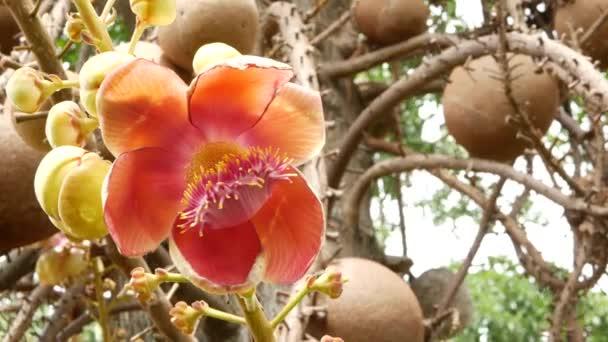 Exotické květiny a strom. Nebezpečná, silná zelená tropická kvítka salalanga kvete nádherná oranžová růžová něžná květiny. Přirozené tropické exotické pozadí
