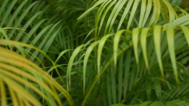 Fényes szaftos egzotikus trópusi növényzet a dzsungelben. Szelektív összpontosít természetes szerves háttér, szokatlan növény lombozat. Nyugodt pihentető vadon élő paradicsom esőerdő absztrakt friss levelek textúra, bokeh.