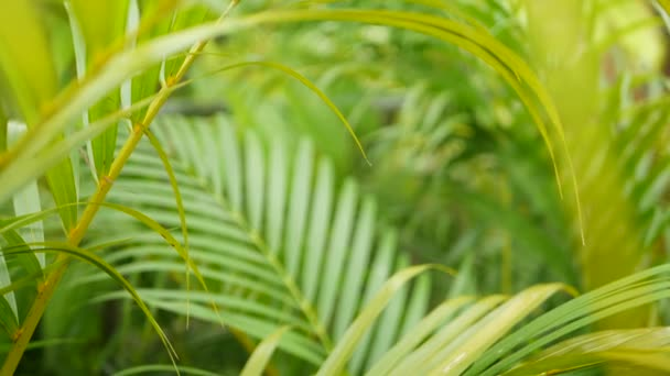 Bright juicy exotic tropical greenery in jungle. Selective focus natural organic background, unusual plant foliage. Calm relaxing wild paradise rainforest abstract fresh leaves texture, bokeh.