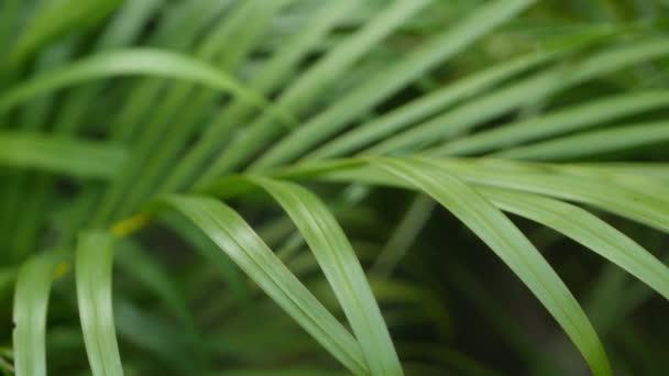 helles exotisches tropisches Grün im Dschungel. Selektive Fokussierung natürlichen organischen Hintergrund, ungewöhnliche Pflanzenblätter. Ruhe entspannende wilde Paradies Regenwald abstrakte frische Blätter Textur, Bokeh.