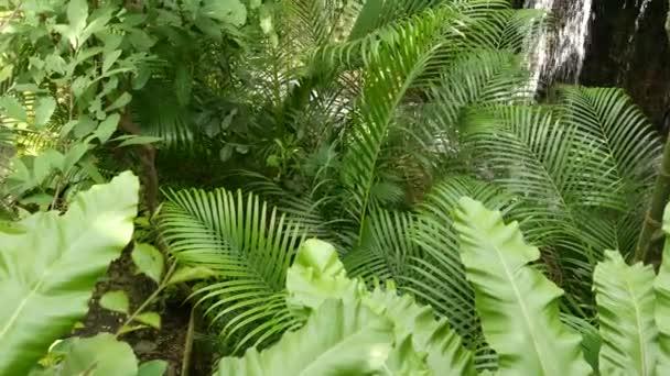 Spritzwasser im Regenwald. Dschungel tropischen exotischen Hintergrund mit Bach und wilden saftigen grünen Blättern in den Wäldern. Regenwald oder Gartengrün. Frische lebendige Paradiespflanzen Laub mit Bokeh
