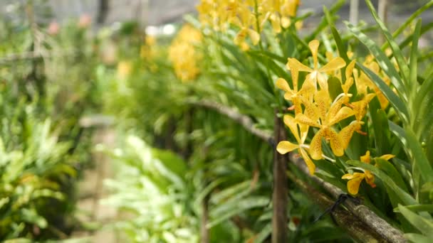 Rozmazané makro zblízka, barevná tropická orchidej květina na jarní zahradě, jemné okvětní lístky mezi slunečným bujným listím. Abstraktní přírodní exotické pozadí s kopírovacím prostorem. Květinové květy a listy vzor
