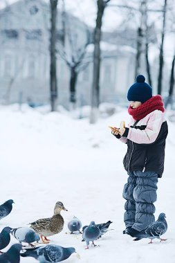 little girl is feeding birds in winter park, concept of caring, family, walk. A kind, generous child treats pigeons with bread. Clothing, seasonal, warm, sports.