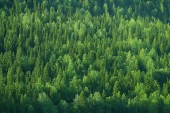 Photo aerial view of coniferous forest in Taiga, Russia