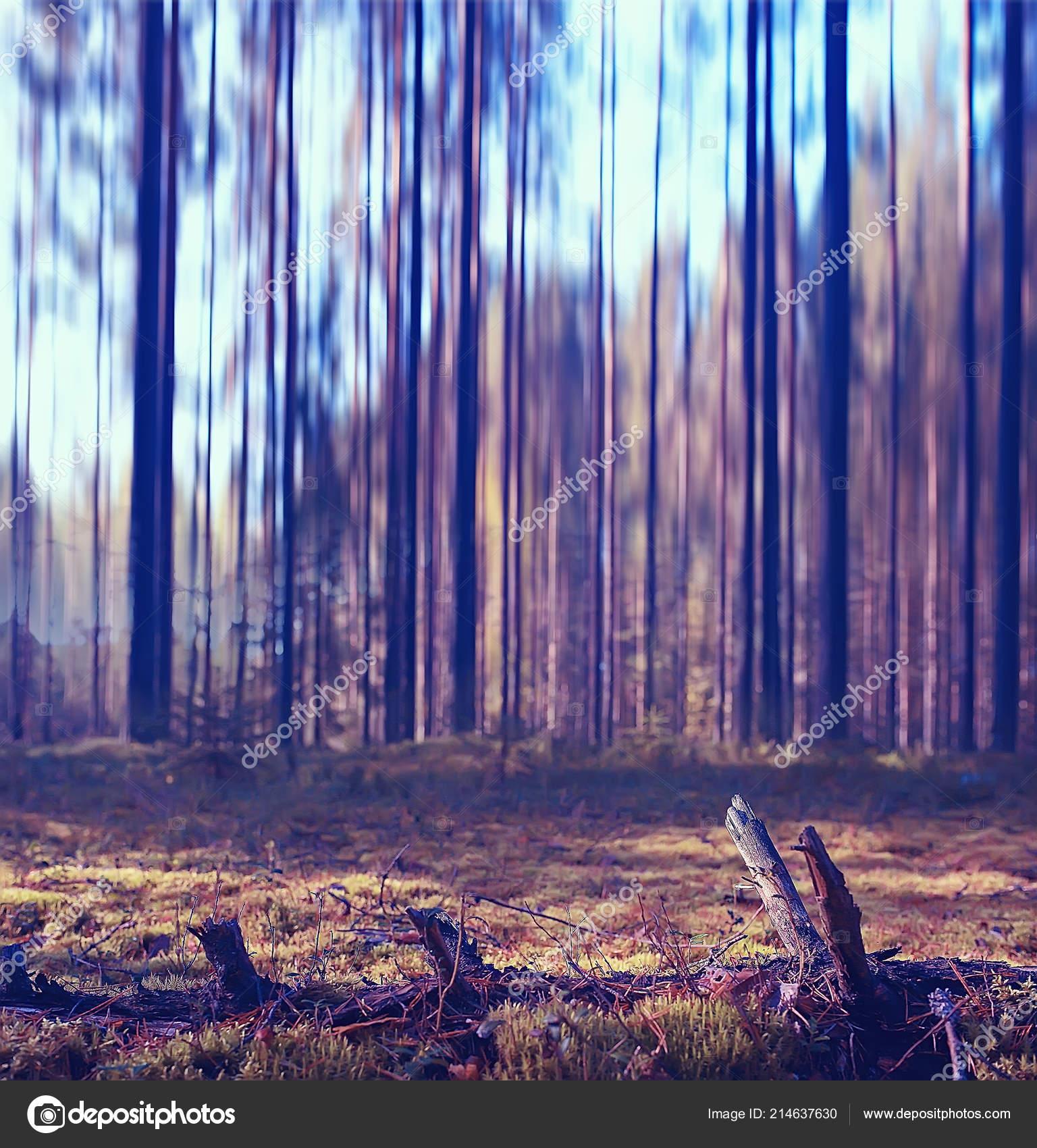 foto de Fond Forêt Automne Brouillé Image Paysage Automne Dans Forêt Forêt ...