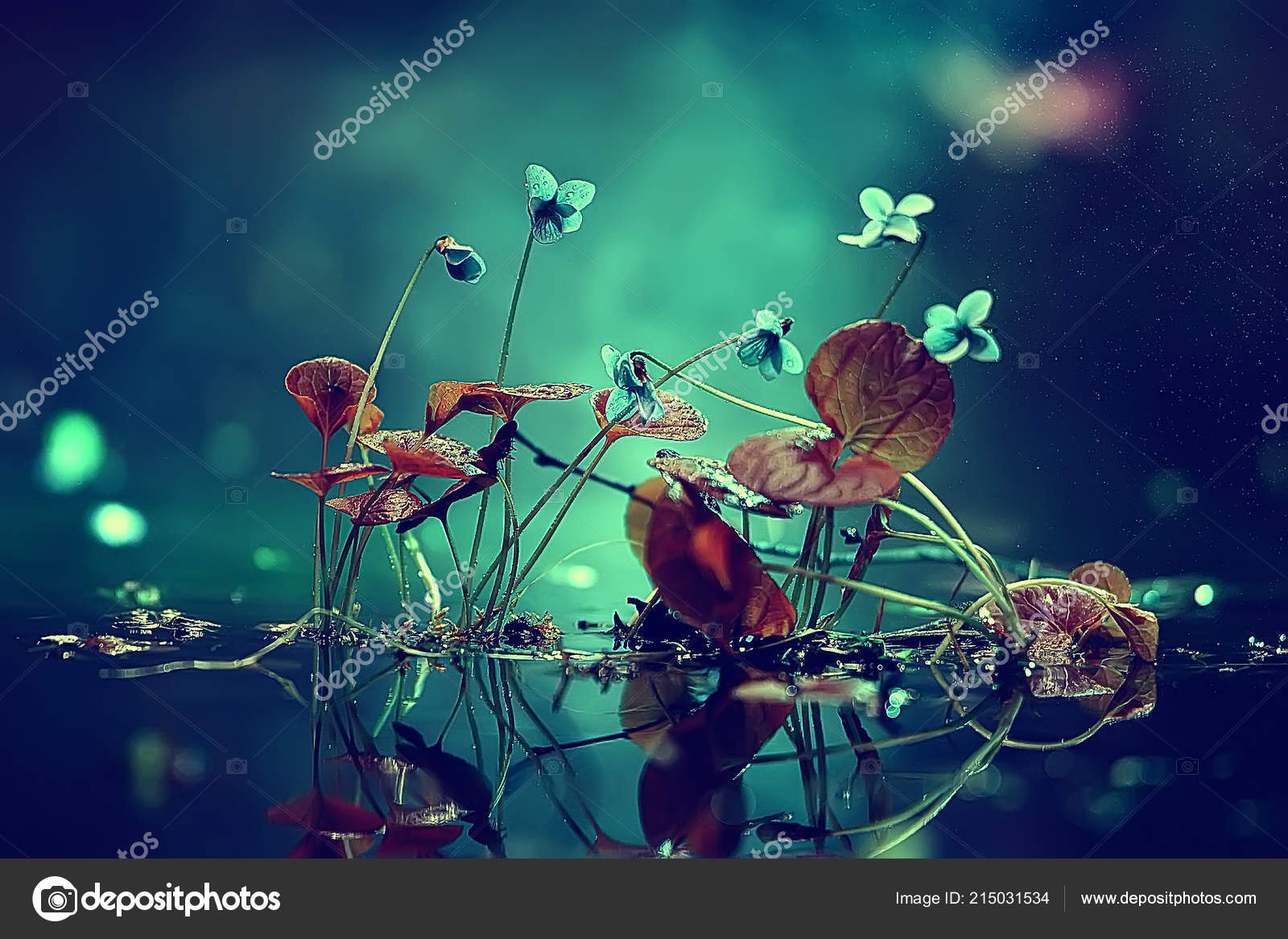 Nature Beauty Flowers Background Flowers Vintage Toning Beautiful Nature Photo Stock Photo Image By C Xload 215031534