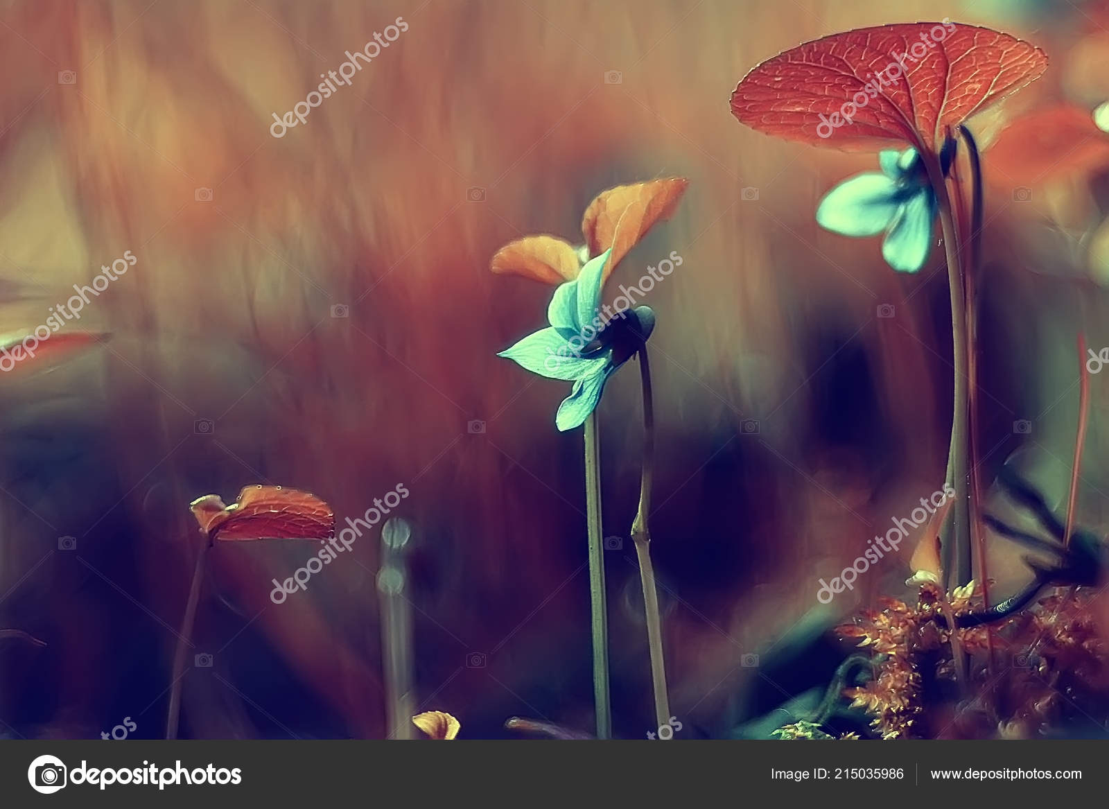 Nature Beauty Flowers Background Flowers Vintage Toning Beautiful Nature Photo Stock Photo Image By C Xload 215035986