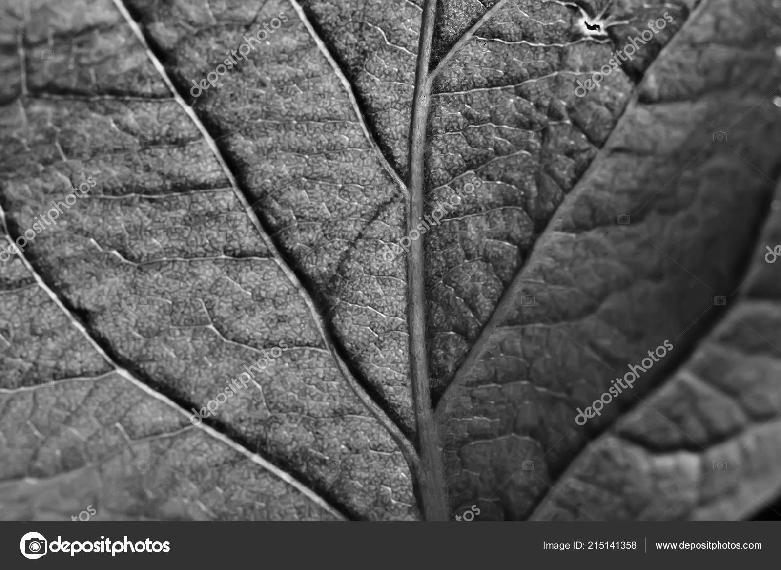 Black And White Nature Wallpaper Leaf Texture Black White