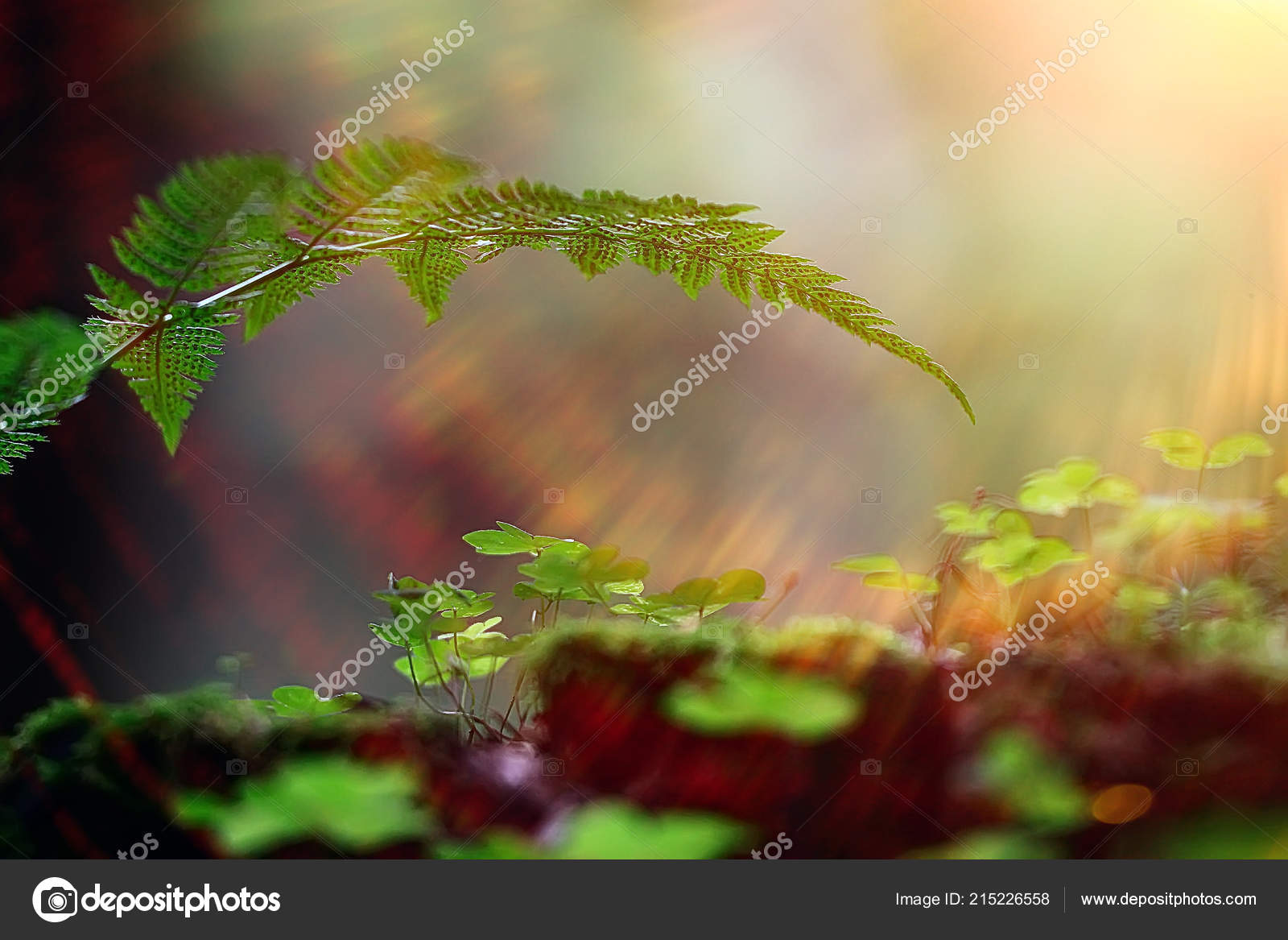 moss macro spring natural spring background rays sun moss nature