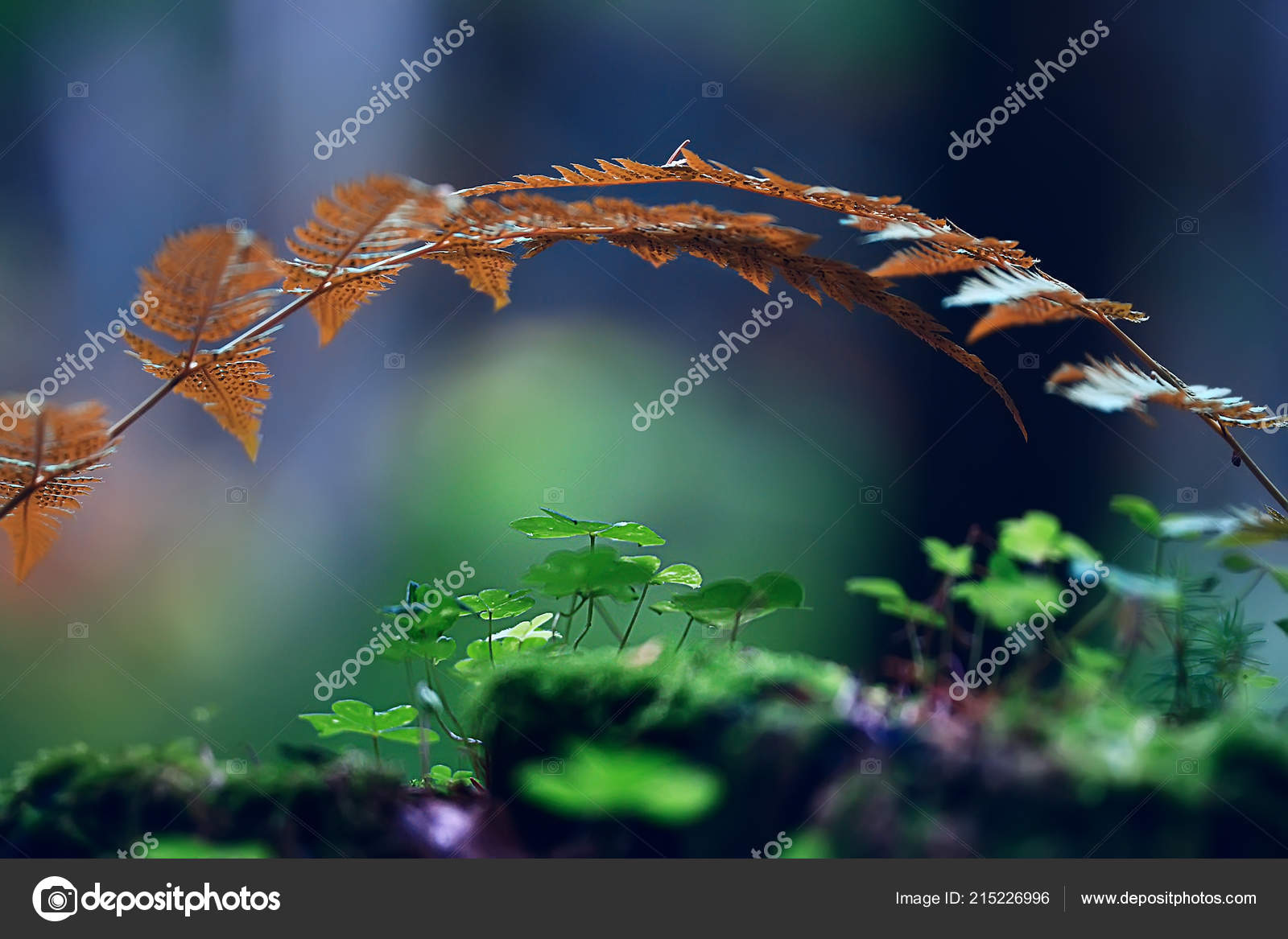 Fern Spring Background Beautiful Nature Forest Park Leaves Design Background Stock Photo C Xload 215226996