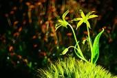 Jarní zelené rostliny zázemí, krásná příroda
