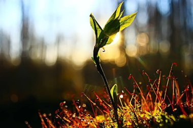 spring young sprout, beautiful nature background