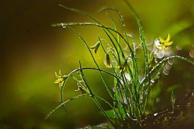 """Картина, постер, плакат, фотообои """"весенние зеленые растения фон, красивая природа постеры печать картины модульные города"""", артикул 224025484"""