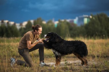 young man walking with Bernese Mountain Dog on the summer field