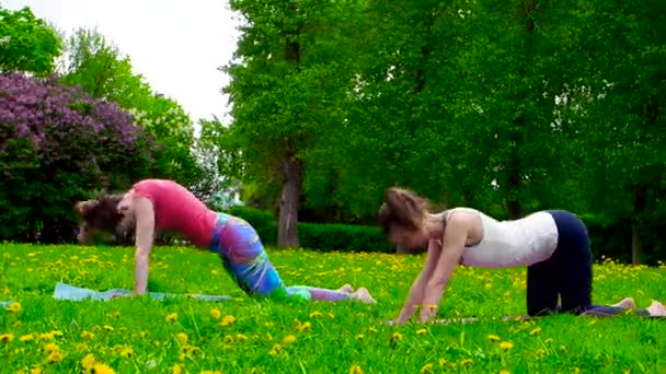 footage of young women doing exercises on green meadow in park