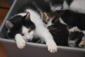 Katzenmama mit ihren Babys
